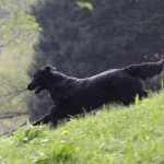 picture-img_1480